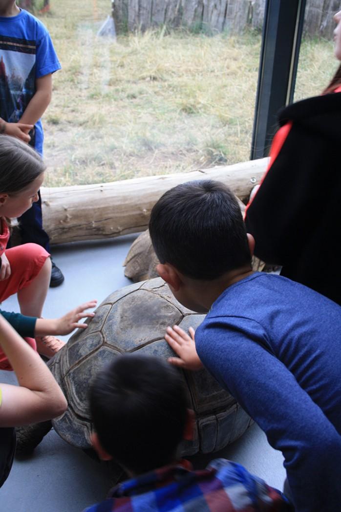 Die Moglis bei den Riesenschildkröten