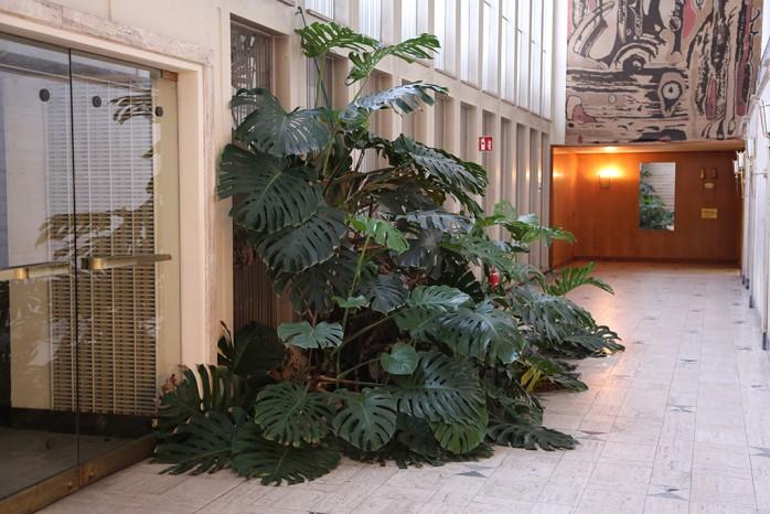 Pflanze in Keplerstraße